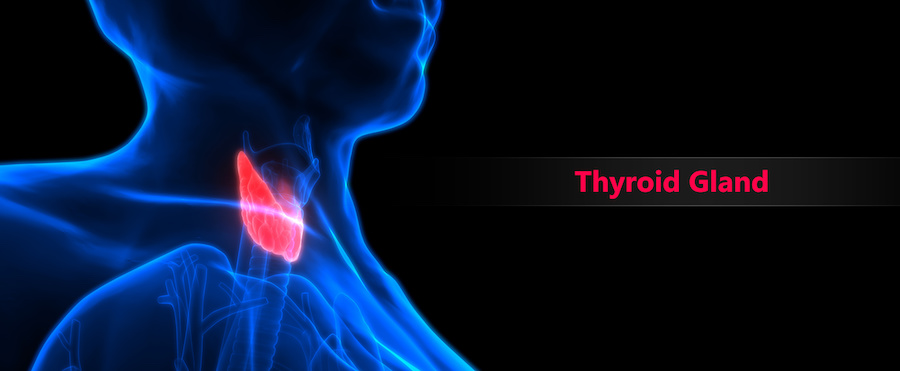 thyroid gland in senior citizens